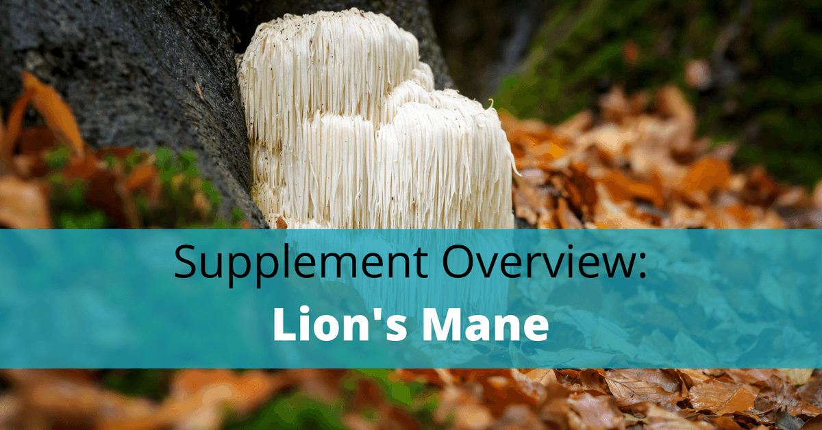 lion's mane mushroom in forest with text overlay