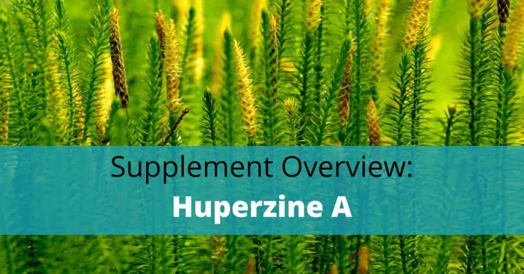 huperzine serrata plant with huperzine a text overlay